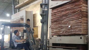 Sản xuất gỗ dán